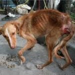 El maltrato a los animales es un delito