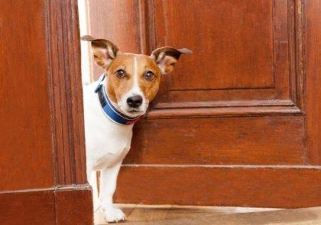 Perros que causan molestias a los vecinos
