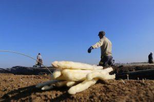 Accidentes laborales de trabajadores agrícolas